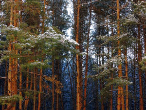 Cold Forest on Sunny Day (November 2015)