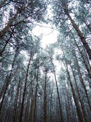 Glowing Frozen Forest (November 2015)