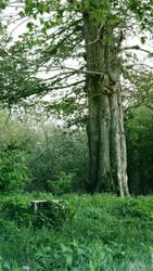 Giant old tree