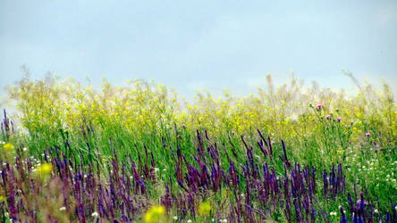 Colors of summer field