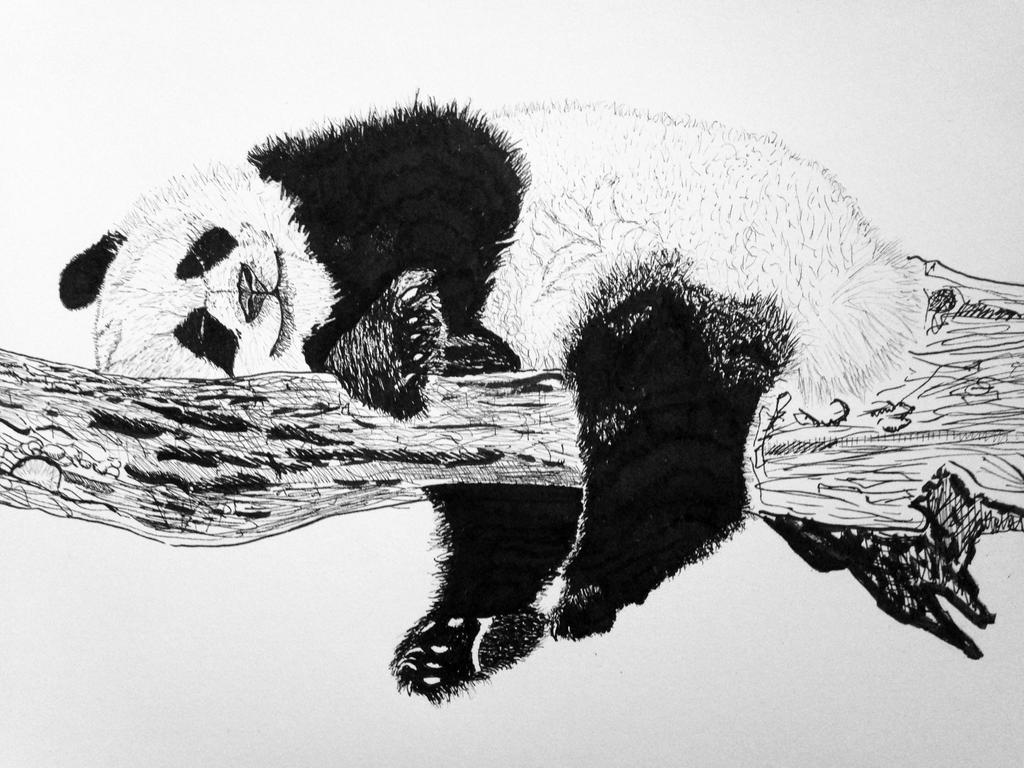 Lazy Sunday, Lazy Panda by GanbareYo