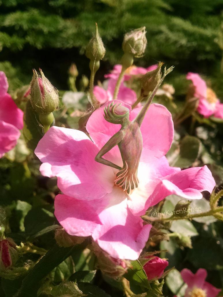 Dancing Rose by byKarenRenee