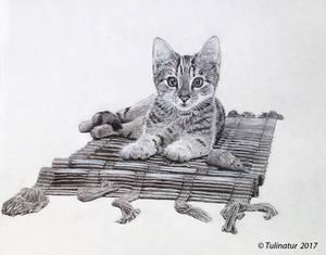 Kitten on the carpet