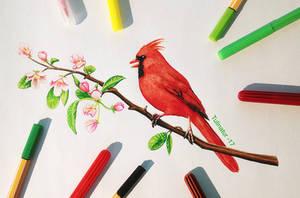 Cardinal (Cardinalis cardinalis) by Tulinatur