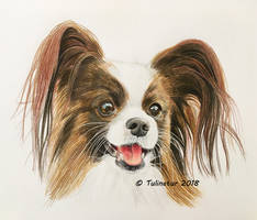 Timmi the papillon by Tulinatur
