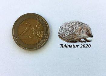 Miniature hedgehog