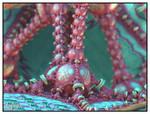 Fairies Playground - Chain Pong 00 -369