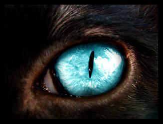 The Captain's Eye III by tritube