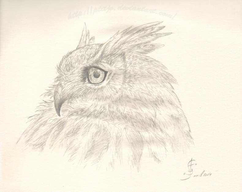 Portrait de Hibou by ptitjo