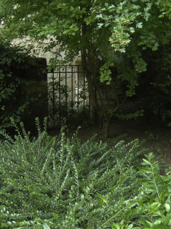 Garden 1 by smaragdistock