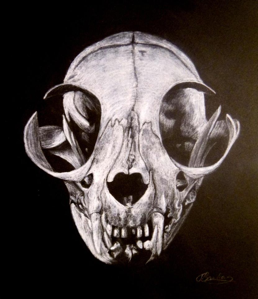 Cat Skull By Veronikeehl On Deviantart
