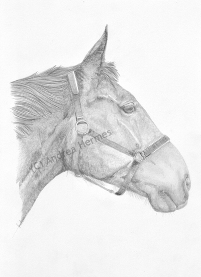 Westphalian Horse Portrait by art-lounge