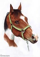 Cute dark dappled horse by art-lounge