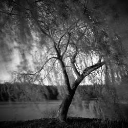 Groaning Tree by NicolasAlexanderOtto