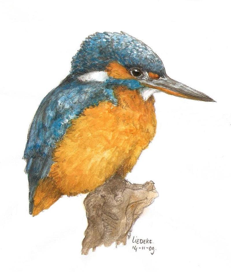 Line Drawing Kingfisher : Kingfisher by liedeke on deviantart