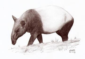 Malaysian Tapir by Liedeke