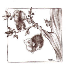 In a tree by Liedeke