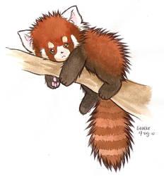 Red panda by Liedeke