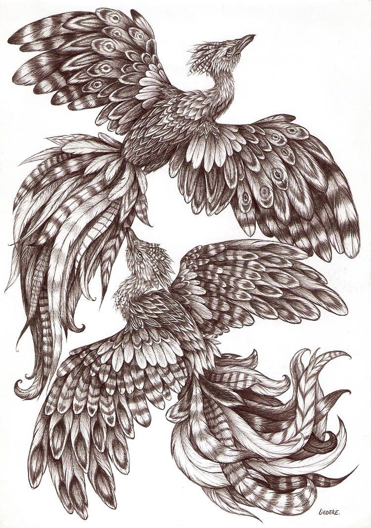 pheonix drawings