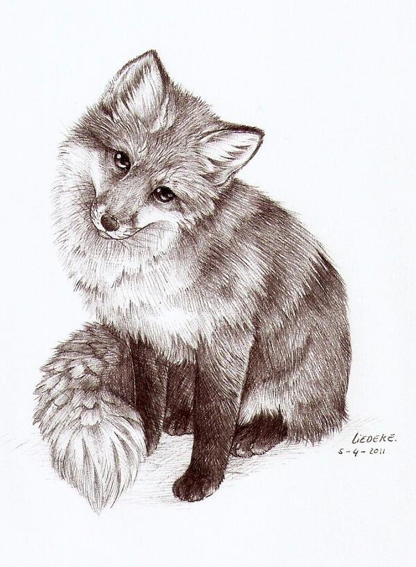curious fox by liedeke on deviantart