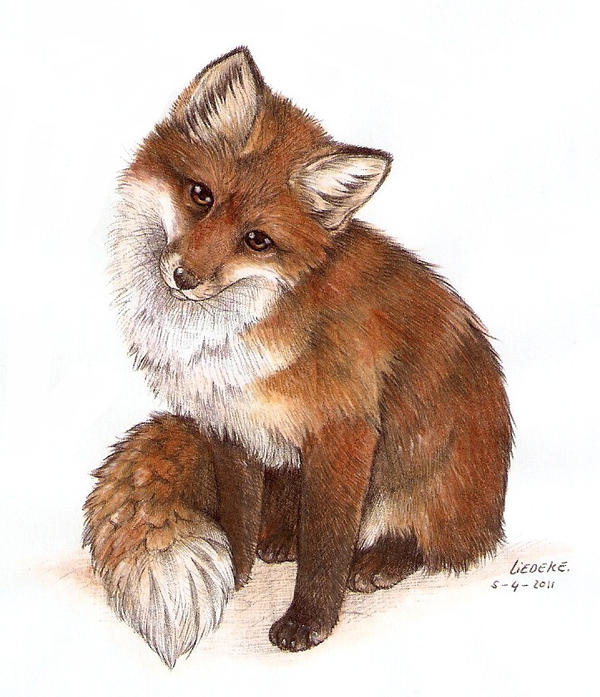 curious fox colored by Liedeke on DeviantArt