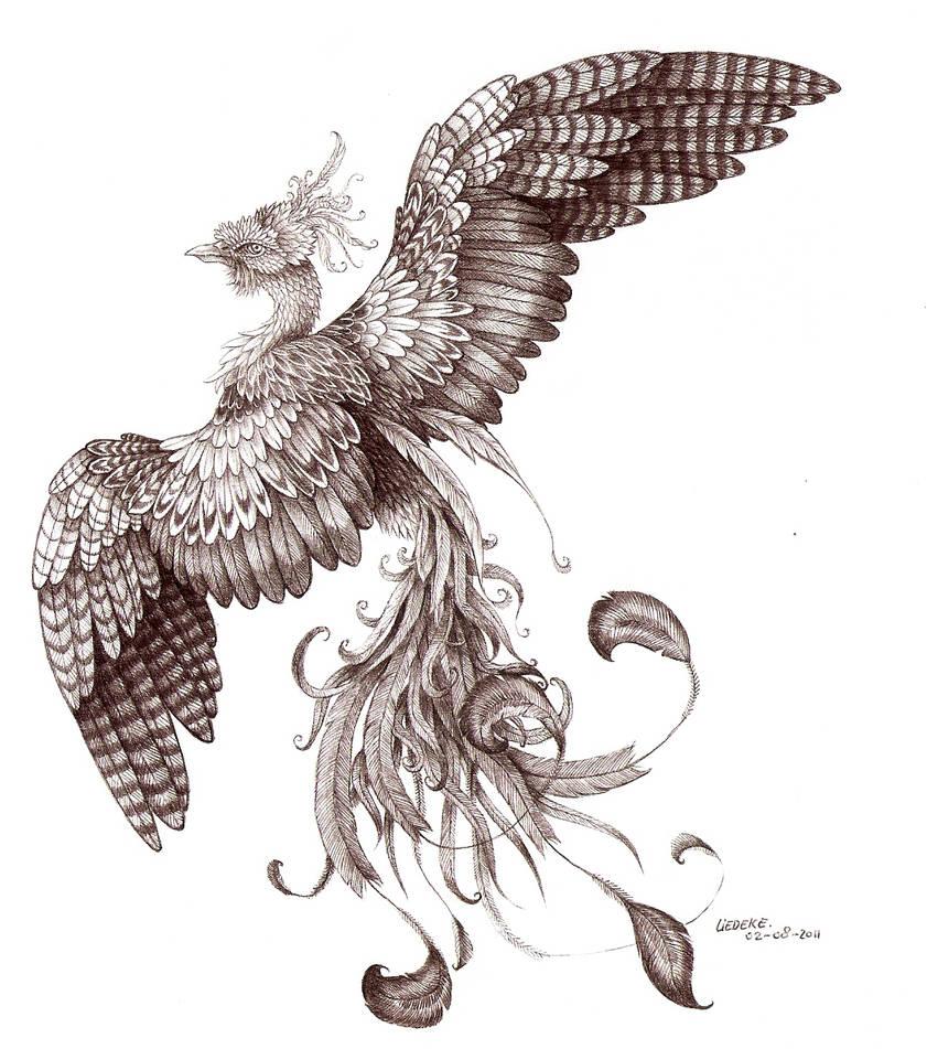 Phoenix uncolored by Liedeke