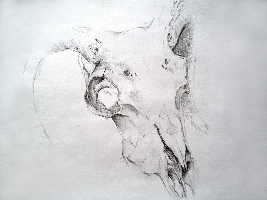Sheep Skull by Aristocrat-knights on DeviantArt