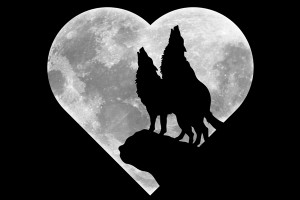 wolf-and-moon's Profile Picture