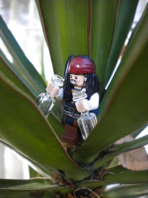 But Where Has All the Rum Gone?