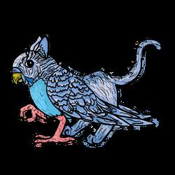 Parakeet Griffon