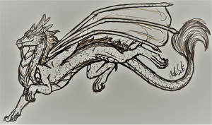 Male Koanan Dragon