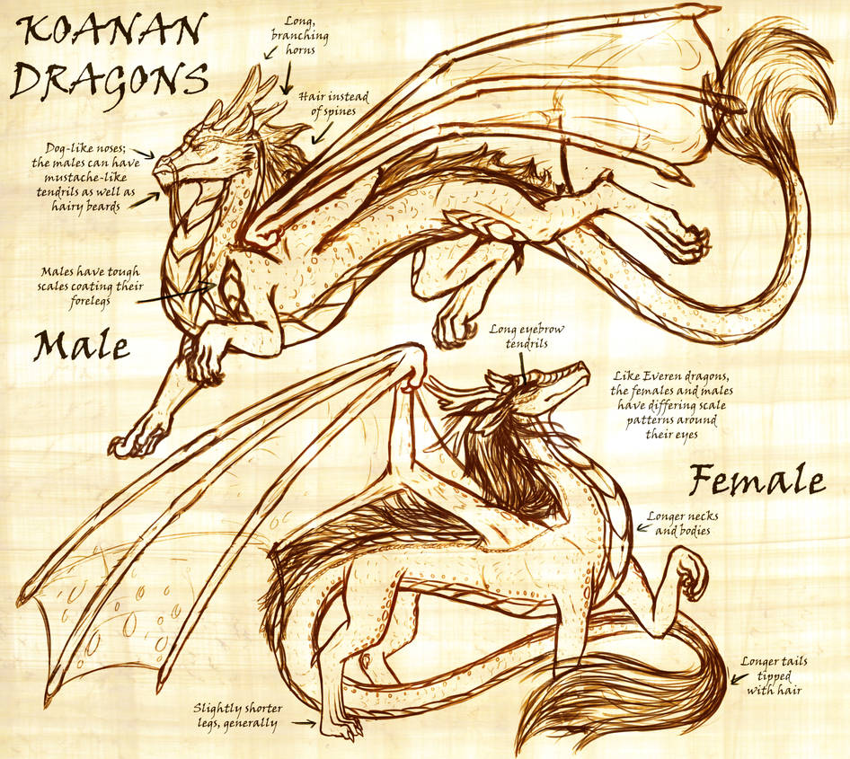 Koanan Dragons (Updated) by InkRose98