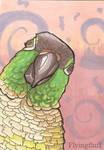 Green Cheek Conure ACEO