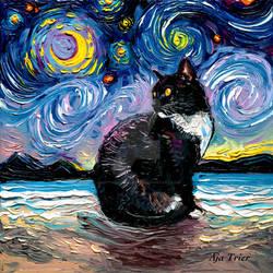 Tuxedo Cat Night 2