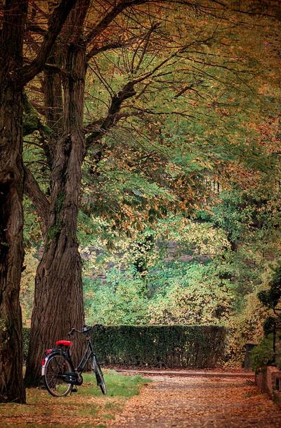 Last days of autumn by ralucsernatoni