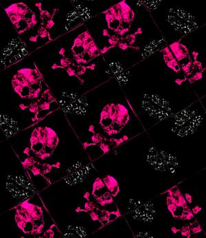 pink skull wallpaper 02