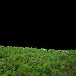 Flowers Field PNG