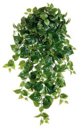 Clear cut PNG TROPICAL PLANT 26