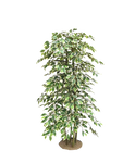 Tree Png Stock 12