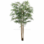 Bamboo Png Stock 1
