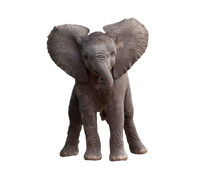 Elephant Png Images : Download elephant png images transparent gallery.
