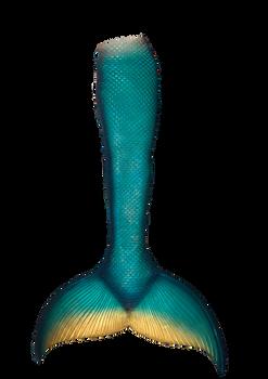 Mermaid Tail Png 7