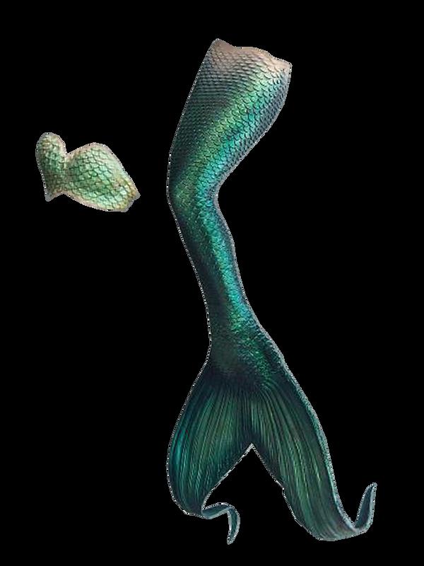 Mermaid Tail Png 9