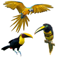 Parrot Bird Png Pack