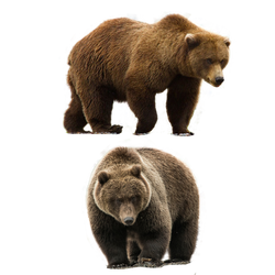Bear Png Pack