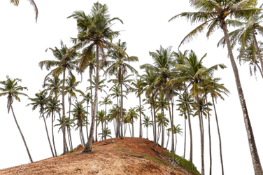 Coconut Hill Png 1