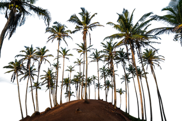 Coconut Hill Png
