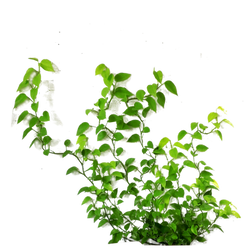 Wall Plant Cut Out Png 3