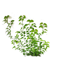 Wall Plant Cut Out Png