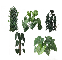 plants pack PNG